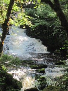 Scenic Waterfall Viewing on Ketchikan Rainforest Tour