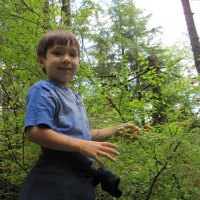 Picking Huckleberries on the Ketchikan Rainforest Tour