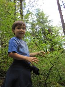 Picking Huckleberries on the Ketchikan Rainforest Tour