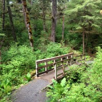 Bridge on Trail on Ketchikan Rainforest Tour