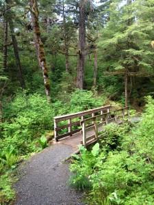 Bridge on Trail on Ketchikan Rainforest Tour