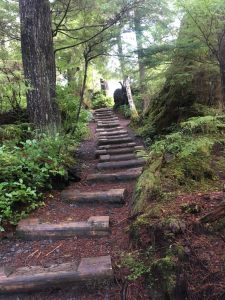 Easy trails through the Rainforest on the Ketchikan Hike and Brew Tour