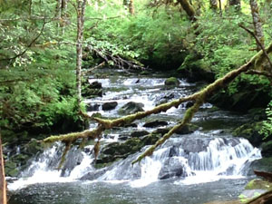 Lunch Creek Ketchikan Wild Wolf Tours